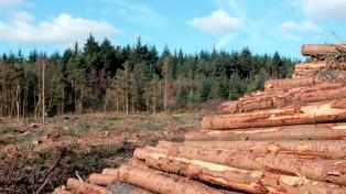 Aprobaron la Ley Agroforestal con el propósito de promover la producción de las diversas áreas