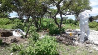 Encontraron 14 cuerpos en una fosa en el estado de Zacatecas