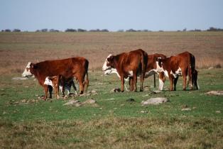 Comienza a operar el mercado de futuros de la carne en el Rofex