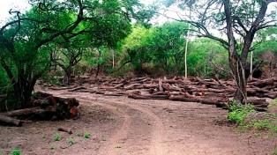 Cayó a una sexta parte la superficie anual deforestada a 10 años de la Ley de Bosques