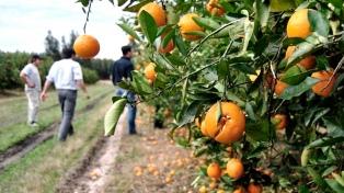 """Citricultores piden """"medidas urgentes"""" para el sector"""