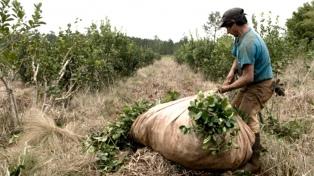 Alerta de la FAO: uno de cada dos habitantes rurales es pobre