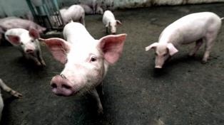 La importación de carne de cerdo desde EEUU impactará en las economías regionales