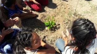 Lanzarán una plataforma online para seguir la plantación de un millón de árboles