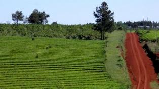 """Presentaron el """"Circuito Agroecológico"""""""