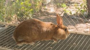 Piden que el Senado apruebe el proyecto que prohíbe usar conejos y ratones en cosmética