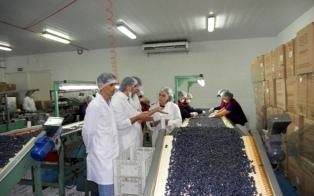 Productores de frutas elogiaron la baja de retenciones para productos de economías regionales