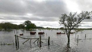 El titular de Carbap estimó pérdidas por US$ 1.500 millones a causa de las inundaciones
