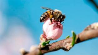 Se quintuplicaron los productores apícolas inscriptos en el registro bonaerense