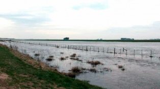 Hay más de 700.000 hectáreas inundadas y un millón anegadas