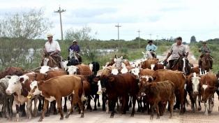 """""""La suba del dólar mejora el precio de la exportación"""", aseguran ganaderos"""
