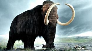 """Confirman la presencia de """"elefantes prehistóricos"""" en el norte bonaerense"""