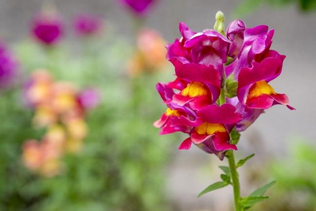 Diez flores que crecen en primavera para darle color a tu jardín