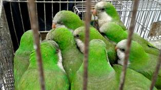 Estudiantes de Veterinaria alertan por el tráfico de animales silvestres
