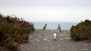 Santa Cruz inició acciones contra visitantes que se fotografiaron alzando pingüinos