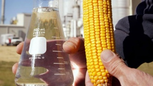 Aumenta la producción del bioetanol de maíz