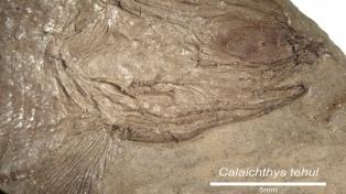 Hallaron fósiles de un pez de más de 240 millones de años