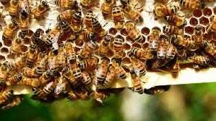 Chaco incrementa la producción de miel orgánica certificada