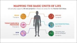 Ya identificaron el primero de los 30 millones de células que clasificarán en un atlas