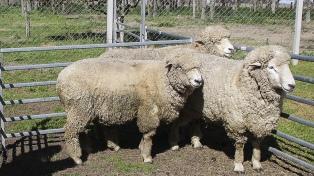 Financian proyectos de producción ovina por 8 millones de pesos