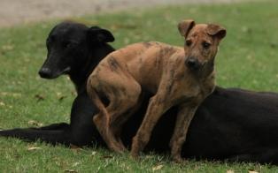 "Entidades protectoras denuncian un ""grave"" maltrato animal"