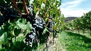Las entidades cooperativas piden eximir al vino de nuevos impuestos