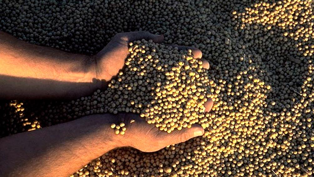 Descargaron 139.208 toneladas de granos esta semana en el puerto