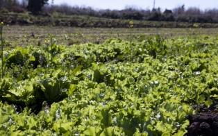 Declaran la emergencia agropecuaria en Mendoza, Salta y La Rioja