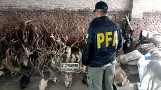 Secuestraron 450 animales embalsamados valuados en 3 millones de pesos