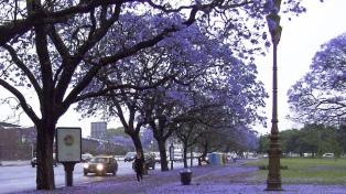 Postales que cautivan: las calles porteñas se tiñeron de lila