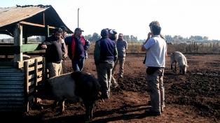 """Productores de porcinos dicen que la reforma tributaria es """"fulminante"""""""