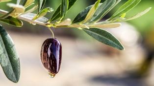 Los productores olivícolas piden una tarifa eléctrica diferenciada