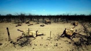 Nuevos focos de incendios por la sequía y las temperaturas extremas