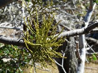 Proponen reforestar con especies nativas para recuperar los suelos afectados por inundaciones y sequías