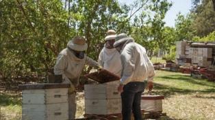 Capacitan como apicultores a presos bonaerenses