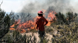 Más de 21.000 hectáreas quemadas por incendios forestales