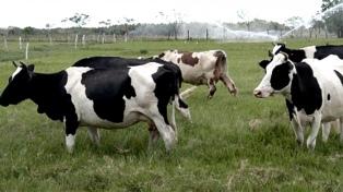China: números y claves para entender el principal mercado de carnes argentinas