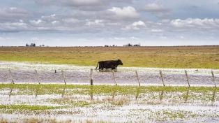 Recomiendan trasladar el ganado a zonas altas por una posible crecida