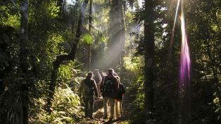 La Selva Misionera, finalista de las 7 Maravillas Naturales Argentinas