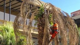 Retiraron la palmera seca del Patio de la Casa Rosada