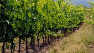 La Ruta del Torrontés combina paisajes y producción del vino emblema de la provincia