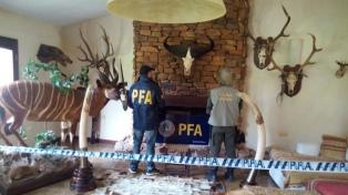Descubrieron un coto ilegal de caza y liberaron a los animales