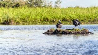Expectativa conservacionista en la provincia por la creación del Parque Iberá
