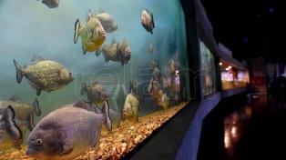 Inauguran en Rosario el acuario de agua dulce más grande del país