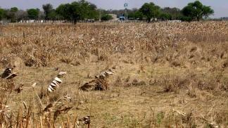 BUENOS AIRES: Recomiendan declarar en emergencia por sequía a otros 24 distritos