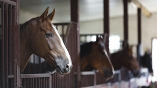 Primer juicio por maltrato animal: mataron a un caballo y fueron condenados