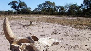Extienden la emergencia agropecuaria por sequía en la provincia