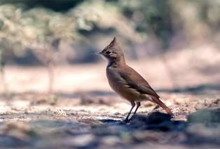 La ONG Aves Argentinas capacitará y desarrollará un plan sustentable en Traslasierra