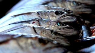 Una terminal pesquera artesanal exportará merluza a Chile