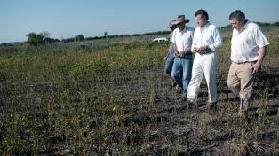 """Afirman que se """"normalizaría"""" la campaña agrícola tras la sequía"""